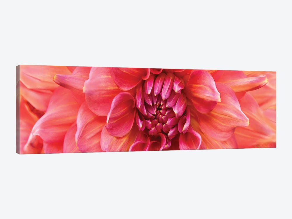 Perfect Dahlia by Susan Michal 1-piece Art Print