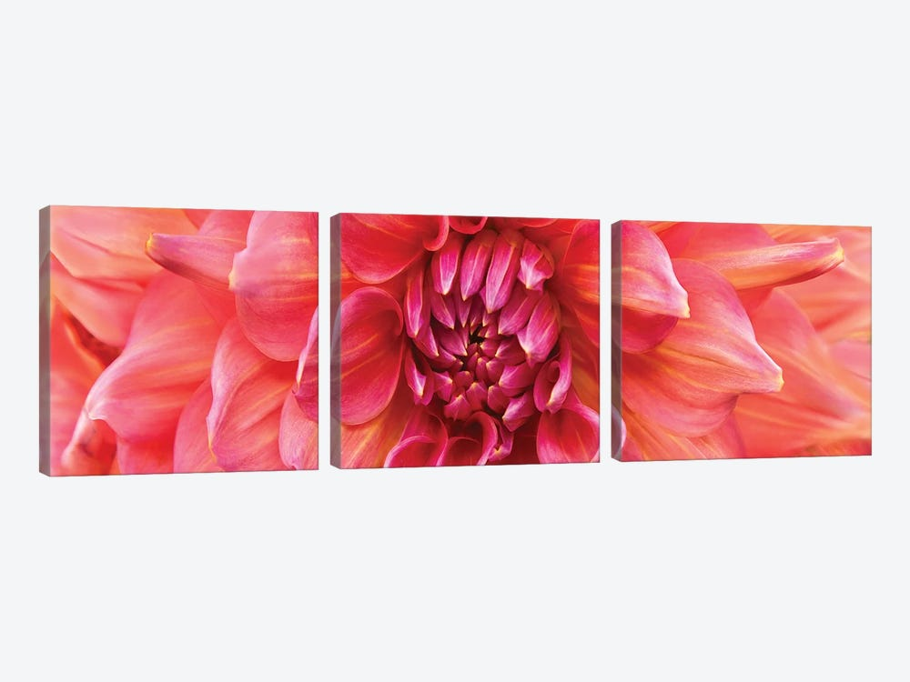 Perfect Dahlia by Susan Michal 3-piece Art Print