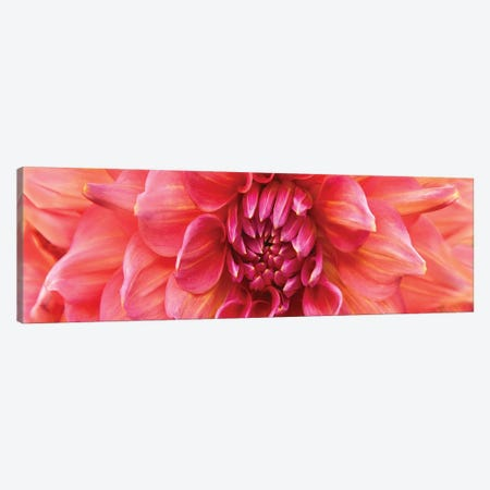 Perfect Dahlia 3-Piece Canvas #SMI20} by Susan Michal Canvas Art Print