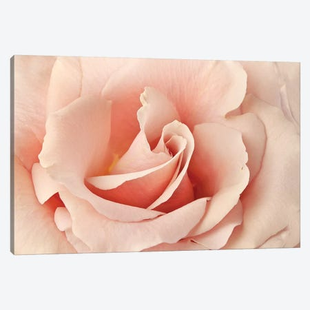 Rosa Canvas Print #SMI21} by Susan Michal Canvas Art Print