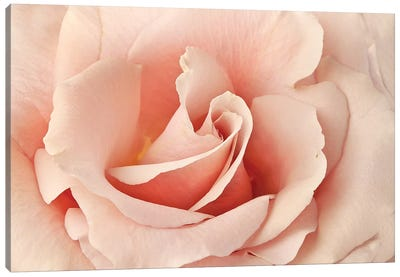 Rosa Canvas Art Print