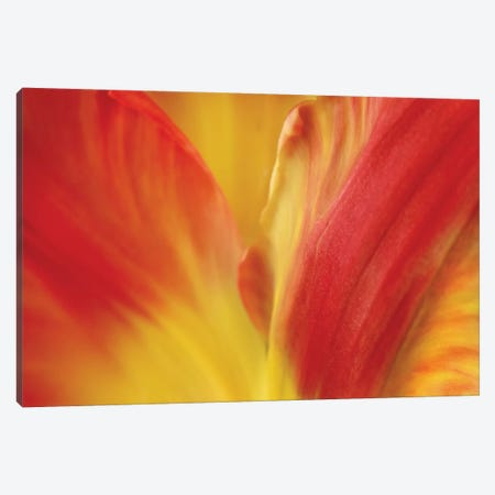 Tulipa Canvas Print #SMI24} by Susan Michal Canvas Wall Art
