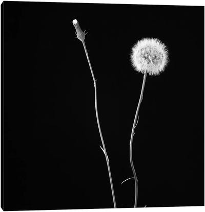 Wish Flower II Canvas Art Print