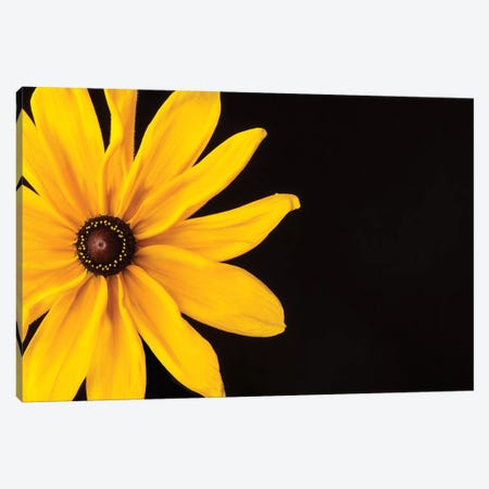 Black Eyed Susan I Canvas Print #SMI2} by Susan Michal Canvas Artwork