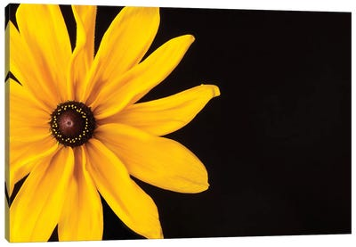 Black Eyed Susan I Canvas Art Print