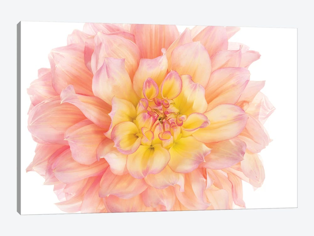 Coral Dahlia by Susan Michal 1-piece Canvas Art