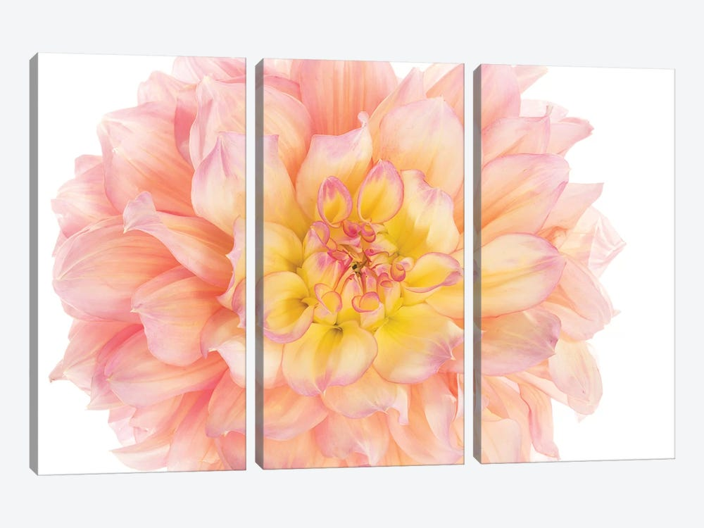 Coral Dahlia by Susan Michal 3-piece Canvas Wall Art