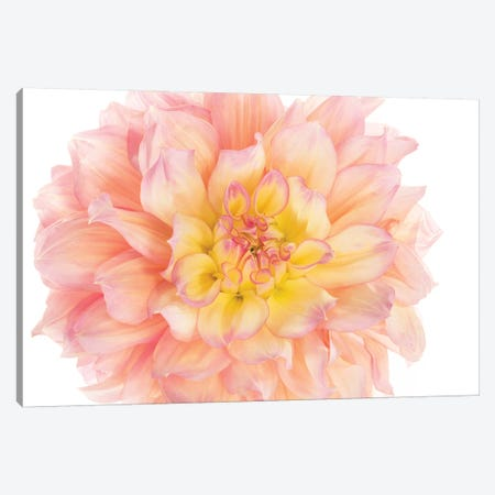 Coral Dahlia 3-Piece Canvas #SMI5} by Susan Michal Art Print