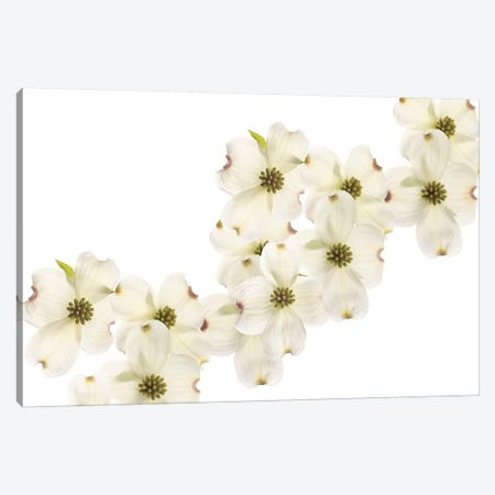 Dogwood Beauty 3-Piece Canvas #SMI6} by Susan Michal Canvas Art Print
