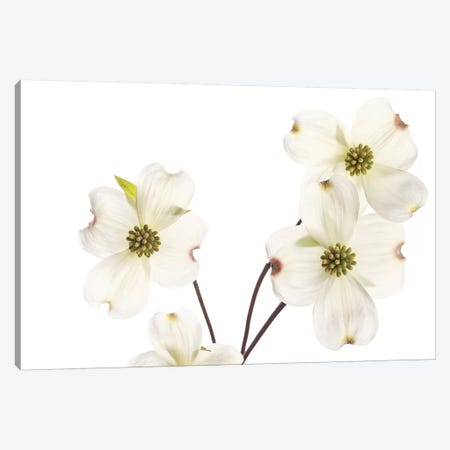 Dogwood Garland 3-Piece Canvas #SMI7} by Susan Michal Art Print
