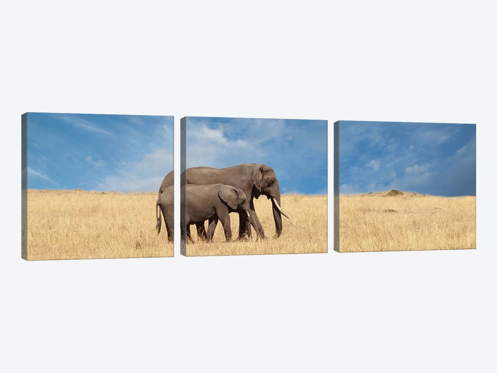 Elephant & Her Calf by Susan Michal 3-piece Canvas Art Print