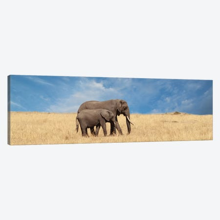Elephant & Her Calf 3-Piece Canvas #SMI8} by Susan Michal Canvas Art