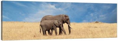 Elephant & Her Calf Canvas Art Print