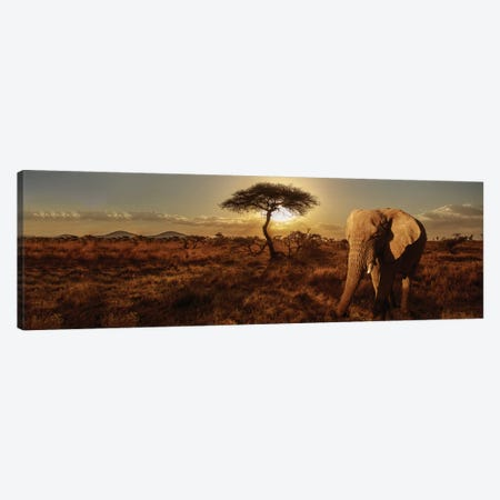 Elephant & Tree Canvas Print #SMI9} by Susan Michal Canvas Artwork