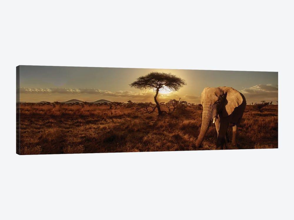 Elephant & Tree by Susan Michal 1-piece Canvas Artwork