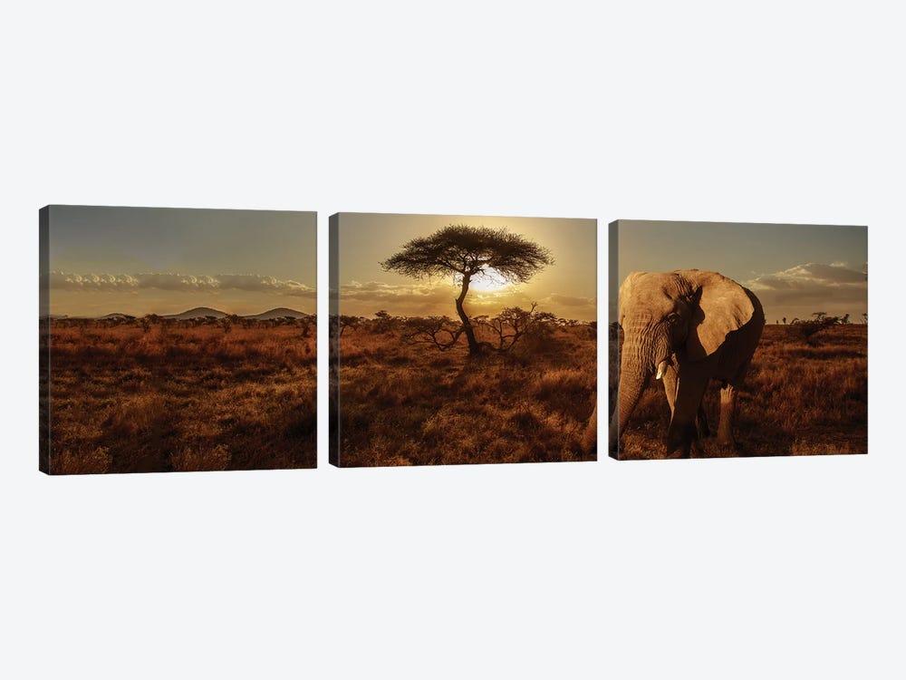 Elephant & Tree by Susan Michal 3-piece Canvas Artwork