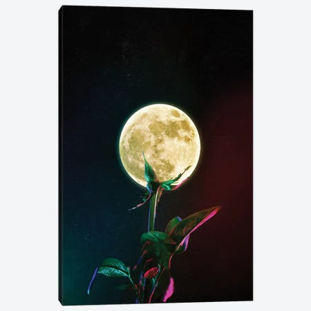 Moon Flower Canvas Print #SML57} by Seamless Canvas Art