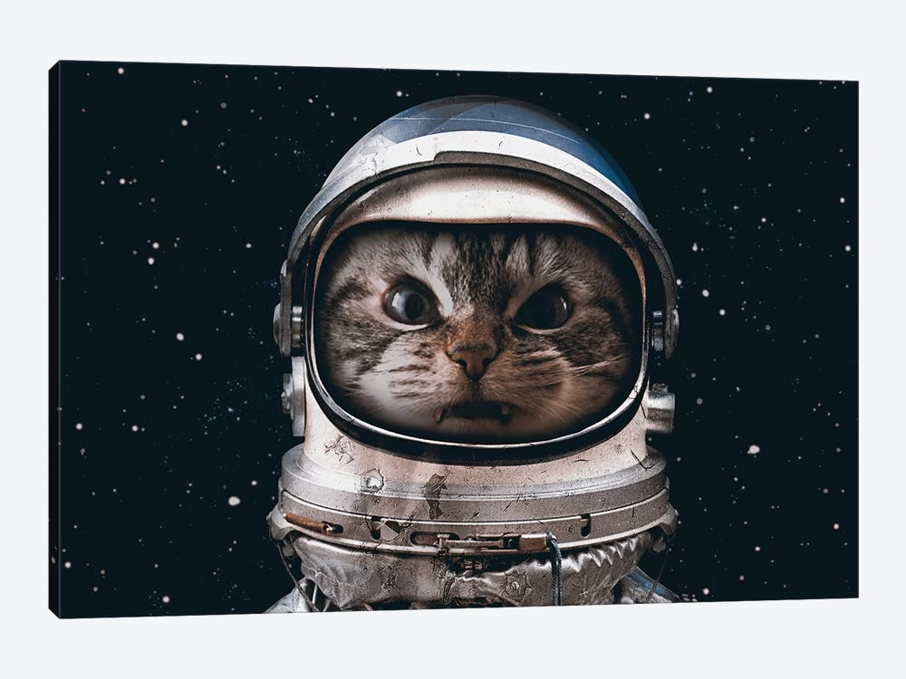 Space Catet by Seamless 1-piece Canvas Artwork