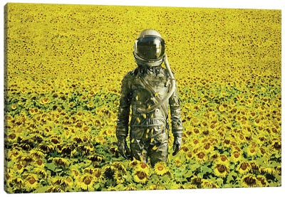 Stranded In The Sunflower Field Canvas Art Print