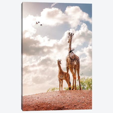 Mother And Baby Giraffe Looking Out Into Sunrise Canvas Print #SMZ103} by Susan Schmitz Canvas Print