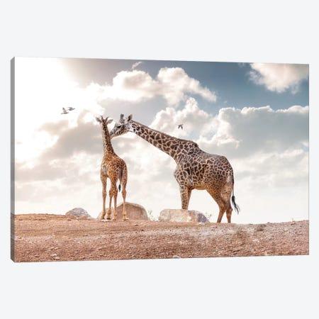Mother Showing Affection To Baby Masai Giraffe Canvas Print #SMZ104} by Susan Schmitz Canvas Artwork