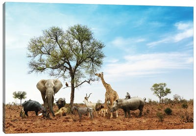 African Safari Animals Meeting Together Around Tree II Canvas Art Print