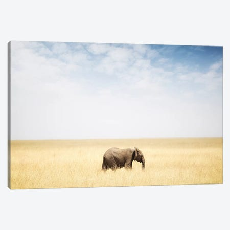 One Elephant Walking In Grass In Africa Canvas Print #SMZ111} by Susan Schmitz Canvas Wall Art