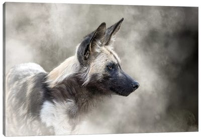 African Wild Dog In The Dust Canvas Art Print