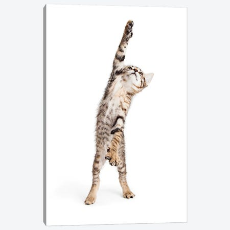 Playful Kitten Standing Reaching One Paw Canvas Print #SMZ120} by Susan Schmitz Canvas Print