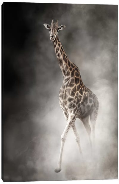 Rothschilds Giraffe In The Dust Canvas Art Print