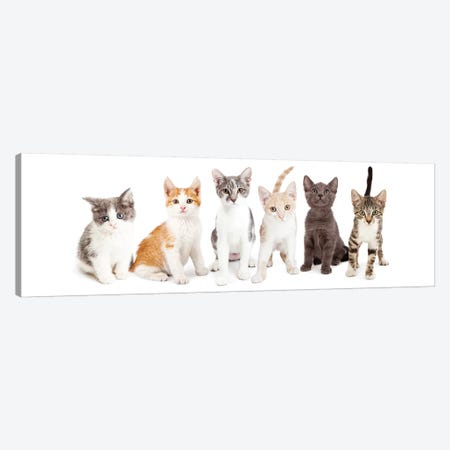 Row Of Cute Kittens Together Canvas Print #SMZ131} by Susan Schmitz Canvas Artwork