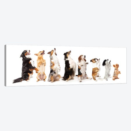 Row Of Dogs Sitting Up To Side Begging Canvas Print #SMZ132} by Susan Schmitz Canvas Artwork