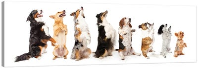 Row Of Dogs Sitting Up To Side Begging Canvas Art Print
