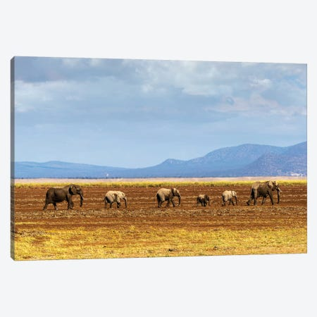 Row Of Elephants Walking In Dried Lake II Canvas Print #SMZ133} by Susan Schmitz Canvas Wall Art
