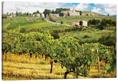 Rows Of Grapes In Tuscany Italy Vineyard Canvas Art Print