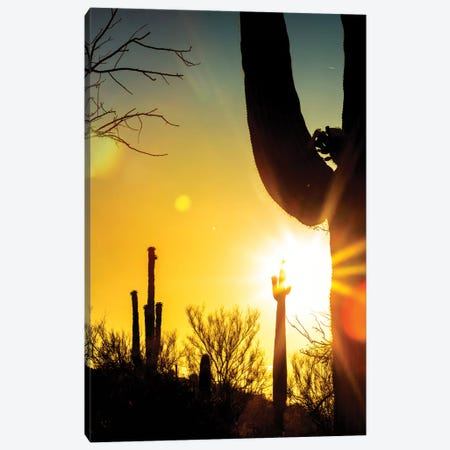 Saguaro Cactus Silhouette At Colorful Sunrise Canvas Print #SMZ139} by Susan Schmitz Canvas Art