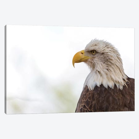 American Bald Eagle Closeup Copy Space II Canvas Print #SMZ13} by Susan Schmitz Canvas Print