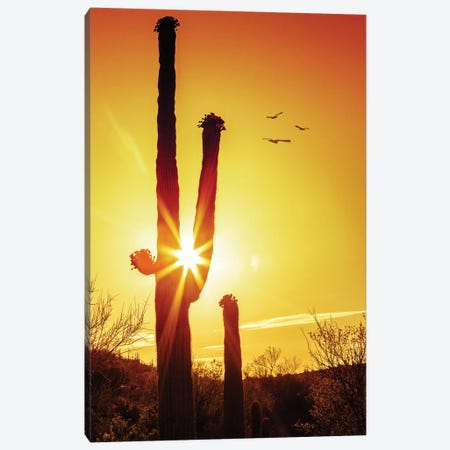 Saguaro Cactus Silhouette At Sunrise Canvas Print #SMZ140} by Susan Schmitz Canvas Art Print