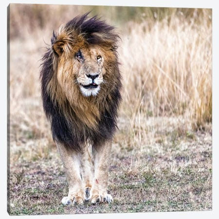 Scarface The Lion King Canvas Print #SMZ141} by Susan Schmitz Art Print