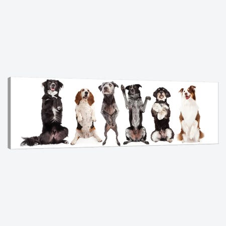 Six Dogs Standing Forward Together Begging Canvas Print #SMZ143} by Susan Schmitz Canvas Print