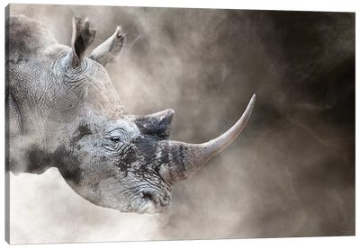 Southern White Rhino In The Dust Canvas Art Print