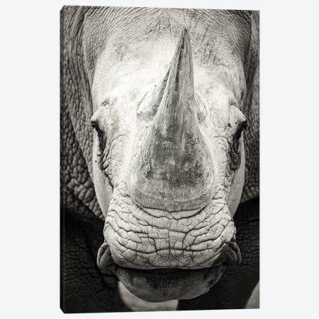 Southern White Rhinoceros Closeup Black And White Canvas Print #SMZ147} by Susan Schmitz Canvas Artwork