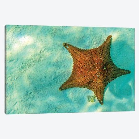 Starfish In Sea With Copy Space Canvas Print #SMZ149} by Susan Schmitz Art Print