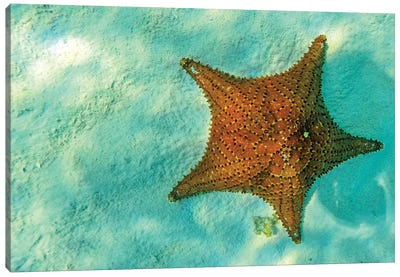 Starfish In Sea With Copy Space Canvas Art Print
