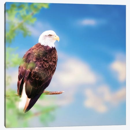 American Bald Eagle Perched On Tree Canvas Print #SMZ14} by Susan Schmitz Canvas Wall Art