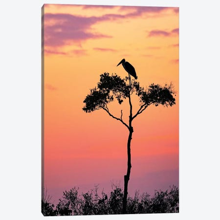 Stork On Acacia Tree In Africa At Sunrise Canvas Print #SMZ150} by Susan Schmitz Canvas Art