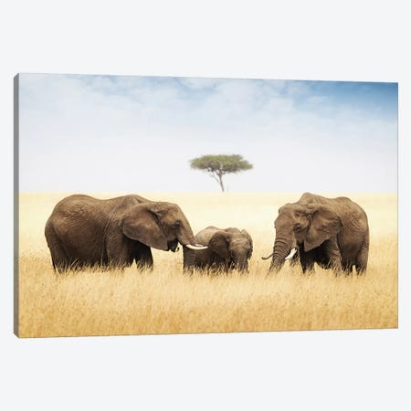 Three Elephant In Tall Grass In Africa Canvas Print #SMZ160} by Susan Schmitz Art Print