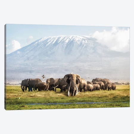 Tusker Tim And Family In Front Of Kilimanjaro Canvas Print #SMZ162} by Susan Schmitz Art Print