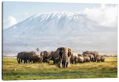 Tusker Tim And Family In Front Of Kilimanjaro Canvas Art Print