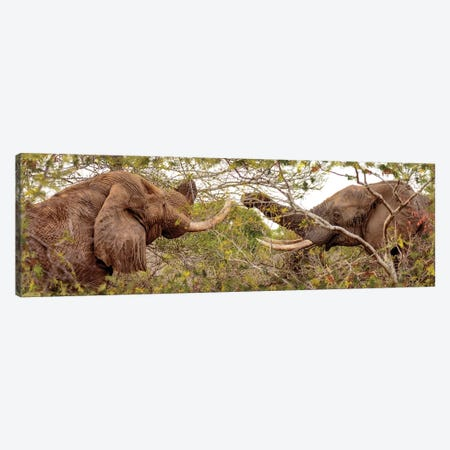 Two Elephants Eating From Trees Canvas Print #SMZ164} by Susan Schmitz Canvas Wall Art